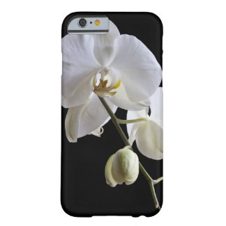 White Phalaenopsis Orchid on Black Barely There iPhone 6 Case