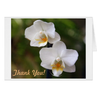 White Phalaenopsis Orchids Greeting Cards