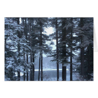 White Pines in Blue Light. Greeting Card