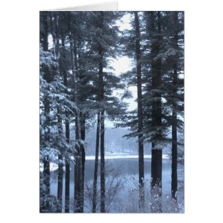 White Pines in Blue Light --- Note Card