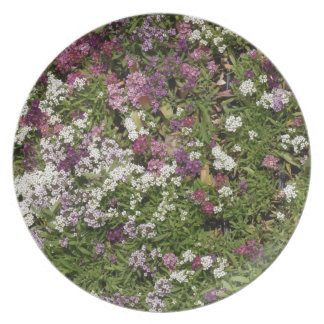 White, Pink And Mauve Flowers Dinner Plates