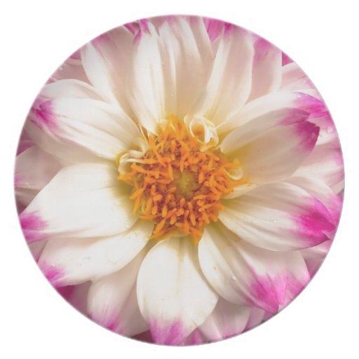 White Pink Flower Plate