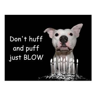 White Pitbull Birthday Postcard