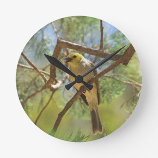 White-plumbed Honeyeater Wall Clock