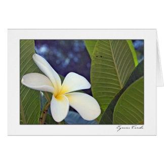 White Plumeria Card