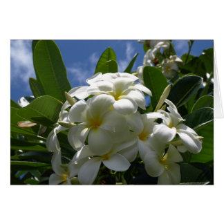 White Plumeria Flower Card