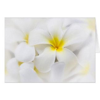 White Plumeria Flower Frangipani Floral Flowers Card