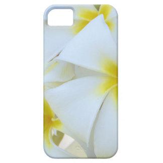 White Plumeria Flowers iPhone 5 Case