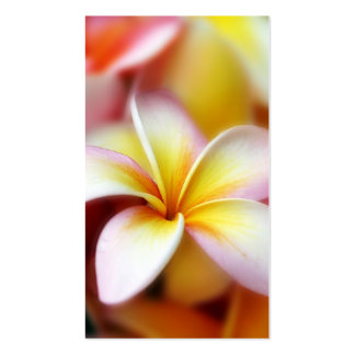 White Plumeria Frangipani Hawaii Flower Hawaiian Double-Sided Standard Business Cards (Pack Of 100)