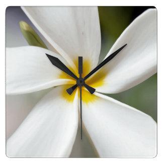 White Plumeria - Macro Portrait Square Wall Clock