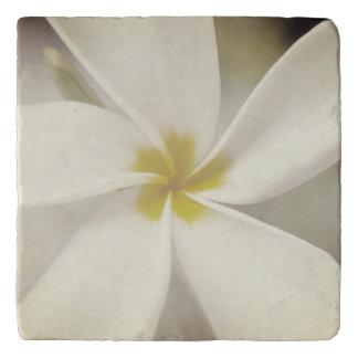 White Plumeria - Macro Portrait Trivet