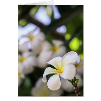 White Plumeria Notecard