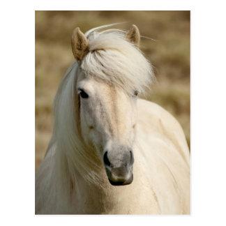 White Pony Postcard