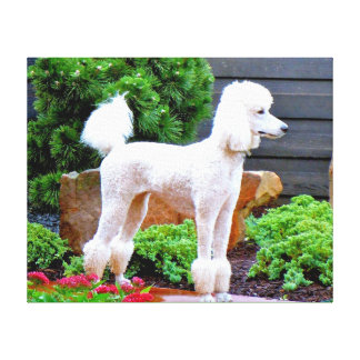 White Poodle in Garden Gallery Wrapped Canvas