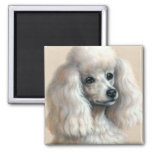 White Poodle Square Magnet