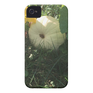 White pumpkin iPhone 4 cases