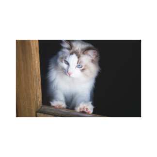 White Ragdoll Looking Outside Wrapped Canvas