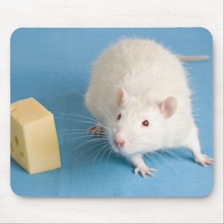 White rat and a piece of cheese mouse pad