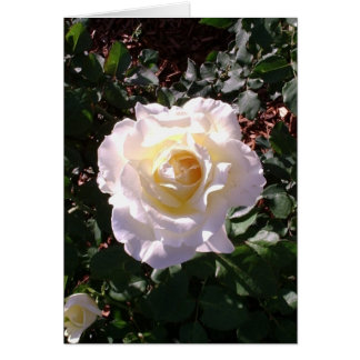 White Rose and Rose Bud Photograph Greeting Card