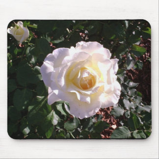 White Rose and Rose Bud Photograph Mouse Pads