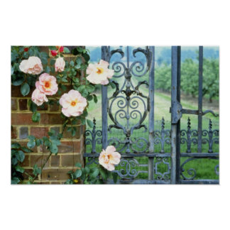 white Rose And Wrought Iron Gate flowers Print