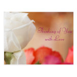 White Rose Bokeh Postcard