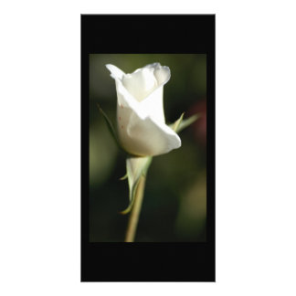 White Rose Bud by Donna Steel Contemporary Artist Customized Photo Card