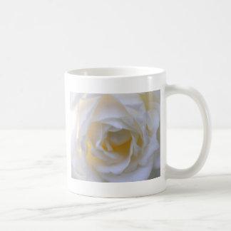 white rose close up mug