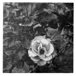 White Rose Collection Tile