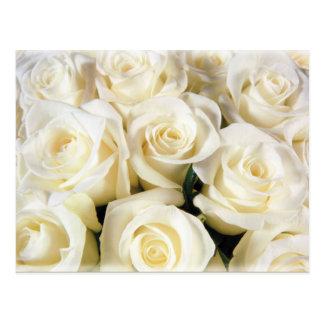 White Rose Elegance Postcard