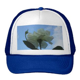 White Rose In The Blue Sky Cap
