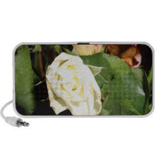 white rose in the dark ddl mini speakers