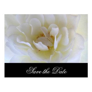 White Rose Macro Postcard