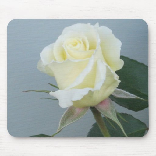 White Rose (Mouse pad)
