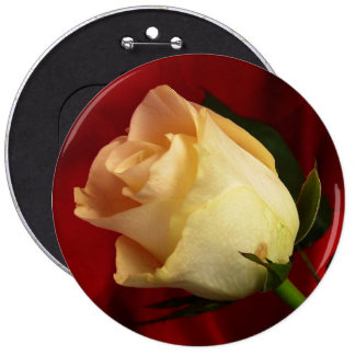 White rose on red background button
