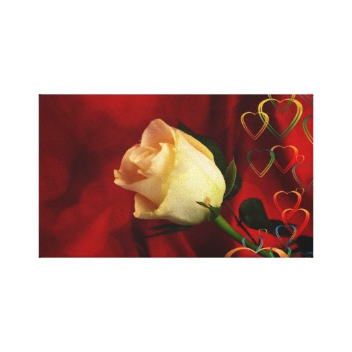 White rose on red background stretched canvas prints