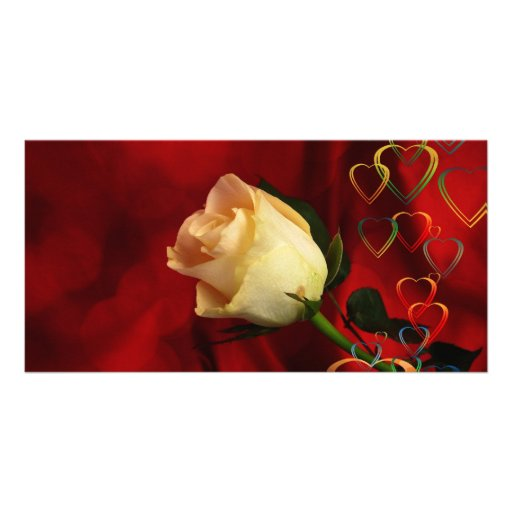 White rose on red background photo greeting card