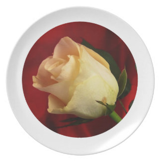 White rose on red background party plates