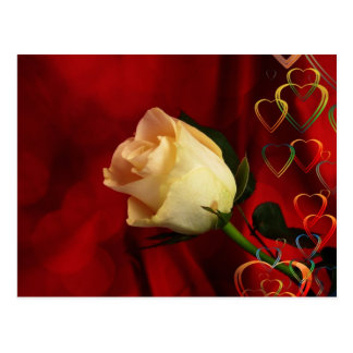 White rose on red background postcard