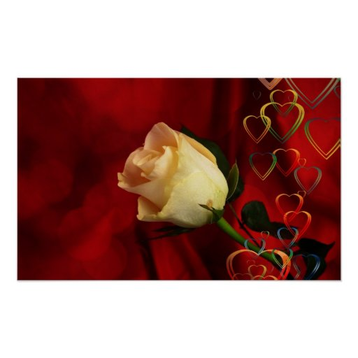 White rose on red background print