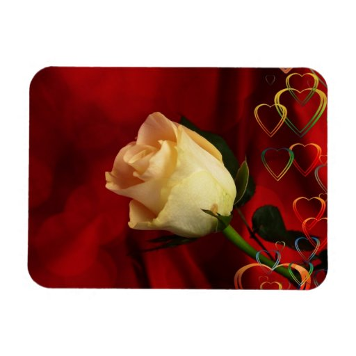 White rose on red background magnet