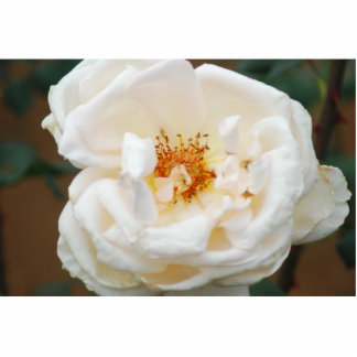 White Rose Cut Out