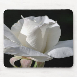 White Rose - Rose Mouse Pads