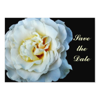"White Rose Save the Date Card 5"" X 7"" Invitation Card"