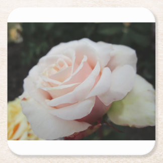 White Rose Square Paper Coaster