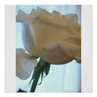 WHITE ROSE TEXTURE POSTER