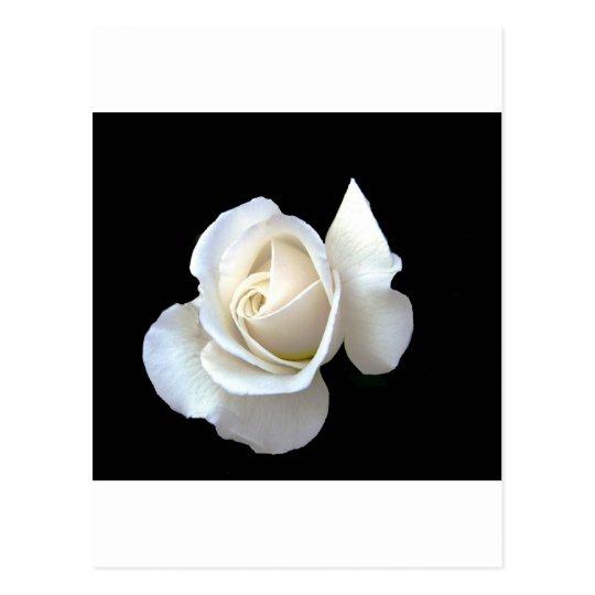 White Rose Wedding Stationery Postcard