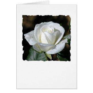 White Rose with Dew Card