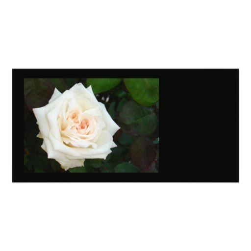 White Rose With Natural Garden Background Photo Cards