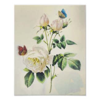 White Roses and Butterflies by Pierre Redoute Poster